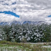 весна. после снегопада :: Alexandr Staroverov