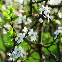 Пока только цветочки... :: Иван