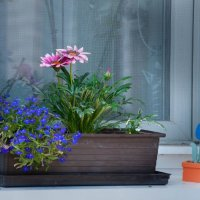 Цветы на подоконнике :: Андрей ТOMА©