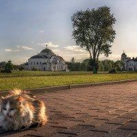 Просто кот... :: Валерий Чернов