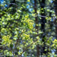 Весеннее зеленое боке :: Татьяна Губина