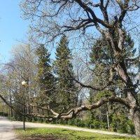 В парке Кадриорг :: veera (veerra)