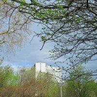 Весна в разгаре! :: Анна Приходько