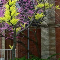 Весна в городе :: Valery Remezau