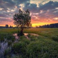 Заливные луга Шередари ... :: Roman Lunin