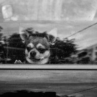 Один в машине - 2 :: Вадим