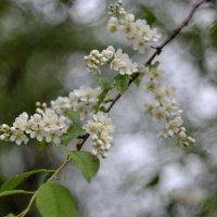 Цветущий май... #3 :: Андрей Вестмит