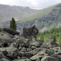 Каменный зверь :: Sayan Wolf