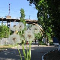 Арочная вершина Днепра!!!... Мосты - вершина инженерно мысли!!!... :: Алекс Аро Аро
