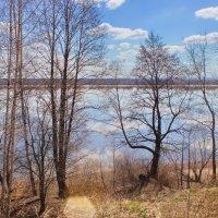 Голый лес на берегу реки :: val-isaew2010 Валерий Исаев