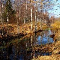 Речка Талица в апреле :: alek48s