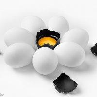 Белое и чёрное :: Светлана Л.