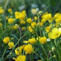 В траве ... :: Лариса Корж