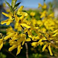 Весны цветы :: Валентина Данилова