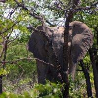 Прёт как Слон. :: Jakob Gardok