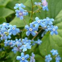 Что глядите на меня, нежно-голубые,,, :: Вячеслав Маслов