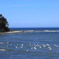 Такого скопища лебедей на море встретила впервые :: Маргарита Батырева