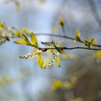 пробуждение весны... :: Андрей Вестмит