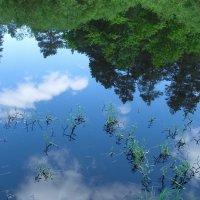 Отражаясь в тайнах зазеркалья... :: Лесо-Вед (Баранов)