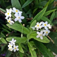 Ах. эти  дачные  цветы! :: Виталий Селиванов