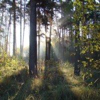 Прохладу октября согрев теплом рассветным :: Татьяна Георгиевна