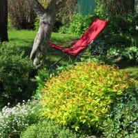 Любимый уголок сада-под грушей в тени. :: Татьяна$