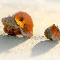 Двое на песке :: Alexander Andronik