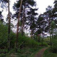 Майский лес :: Татьяна Котельникова