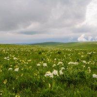 Высокогорная весна. :: Леонид Сергиенко