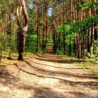 по лесной дороге :: Александр Прокудин