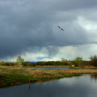 Будет дождь... :: Нэля Лысенко