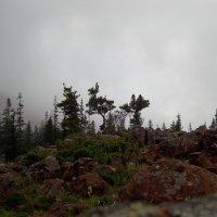 Туман на Борусе :: Sayan Wolf