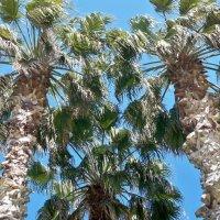 Три пальмы. :: ТаБу
