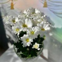 Белые цветы :: Наталия Лыкова