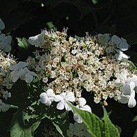Цвет мая. :: Владимир Драгунский