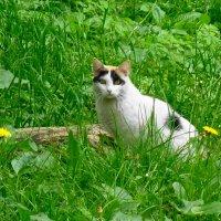 Котишка на солнечной поляночке :: Маргарита Батырева