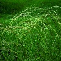 Ветер травинки клонит :: Raduzka (Надежда Веркина)