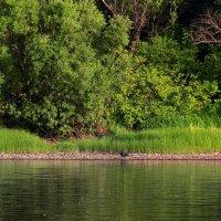 Вдоль зеленых берегов :: Грег