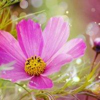 Цветочек :: Рина Вишня