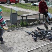 ... и голуби :: Олег Афанасьевич Сергеев