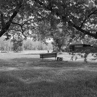 Одинокая скамья :: Валерий Михмель