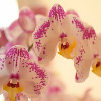 Орхидеи :: Александр