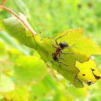 И ливень летний всё умыл в природе... :: Андрей Заломленков
