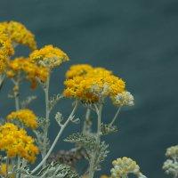 Горный цветок :: Русс Род