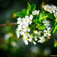 Весна :: Юрий Фёдоров