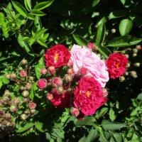 Букет роз... :: Алекс Аро Аро
