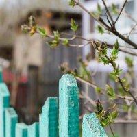 весна :: Elena Wise