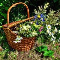 Полевые цветы :: Nina Karyuk
