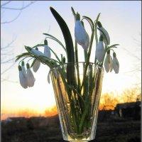 Весной нужна нам нежность... :: Антонина Балабанова