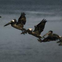 Птицы щастья завтрашнего дня) :: Сергей Жидков